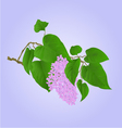 Purple Lilac branch with flowers and leaves vector image