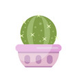 cactus house plant indoor flower in pot elegant vector image vector image