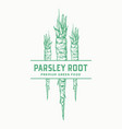 parsley root sign symbol or label template vector image vector image