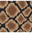 Brown snake seamless pattern vector image vector image