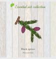 Black spruce essential oil label aromatic plant