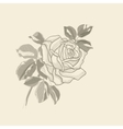 Hand drawing background old rose vector image