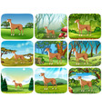 set greyhound in different scene vector image vector image
