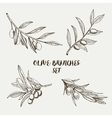 Graphic olive branches set vector image