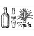 Glass botlle of tequila cactus salt lime vector image vector image