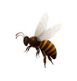 striped flying bee side view icon vector image