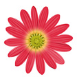 A pink sunflower vector image vector image