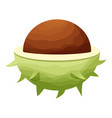 chestnut icon cartoon style vector image vector image