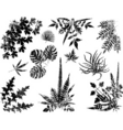 grunge plant elements vector image vector image
