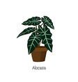 houseplant in pot hand drawn art vector image vector image