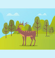 natural park with biodiversity for deer animals vector image