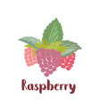 raspberry forest berry vector image