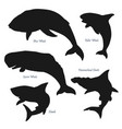 whales and sharks ocean predator silhouettes vector image vector image