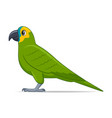 amazon parrot bird on a white background vector image