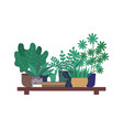 houseplant in orangery greenhouse shelf flowers vector image vector image