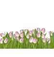 Pink tulips isolated on white EPS 10 vector image vector image