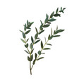 thyme leaf green isolated medicinal set of vector image vector image