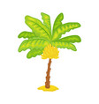 cartoon banana palm tree - green tropical plant vector image