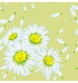 chamomiles Seamless flowers pattern vector image