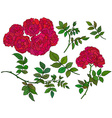 collection of hand drawn red bush roses vector image