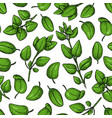 oregano seamless pattern isolated herb vector image vector image