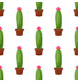 seamless pattern with cactus plant pot vector image