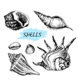 Seashells vector image