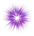 abstract purple explosion design background vector image vector image