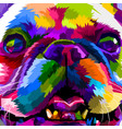 close up of french bulldog vector image vector image