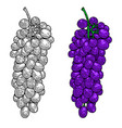 grape on white background for package poster sign vector image vector image
