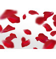 rose petals vector image