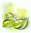 Spring abstract background Green leaves vector image vector image