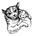 cat and kitten hand drawn vector image vector image