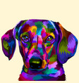 colorful daschund on pop art vector image vector image