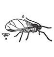 hop aphid vintage vector image vector image