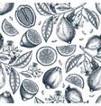 ink hand drawn citrus fruits backdrop lemons vector image