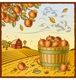 Landscape with apple harvest vector image vector image