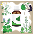 medicinal herbs with bottle vector image vector image