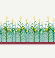 seamless isolated cornfield vector image