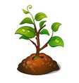 the development of the tree from seeds planting vector image vector image