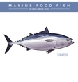 Tuna Marine Food Fish vector image vector image