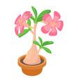 exotic cactus icon cartoon style vector image