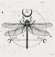 a hand-drawn dragonfly vector image