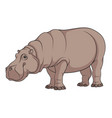 color of a hippopotamus vector image vector image
