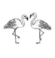 flamingo bird engraving vector image vector image