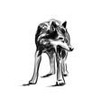 ink sketch wolf vector image