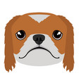 isolated pekingese avatar vector image vector image