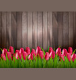 nature spring background with red tulips on vector image vector image
