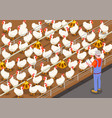 poultry isometric background vector image vector image