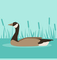 canada goose on water vector image